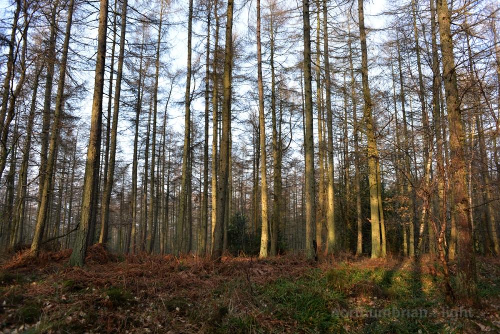 Swallowship Woods