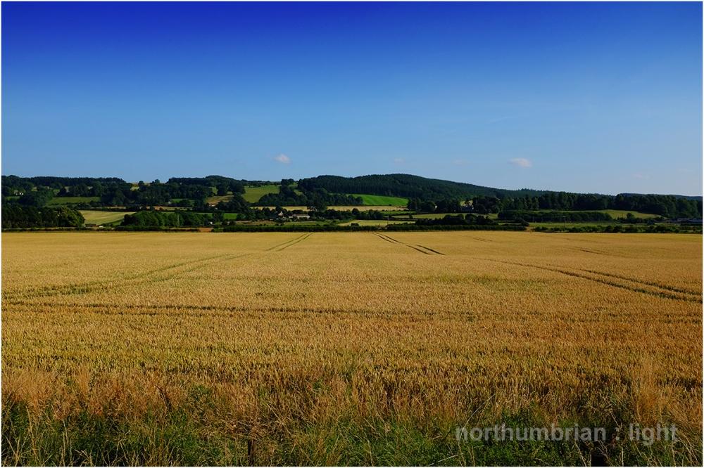 Corbridge summer
