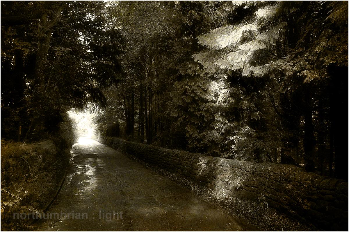 Sunshine after rain | northumbrian : light