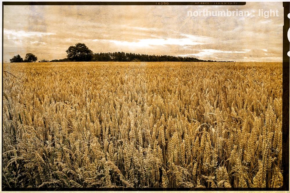 The fields near ...