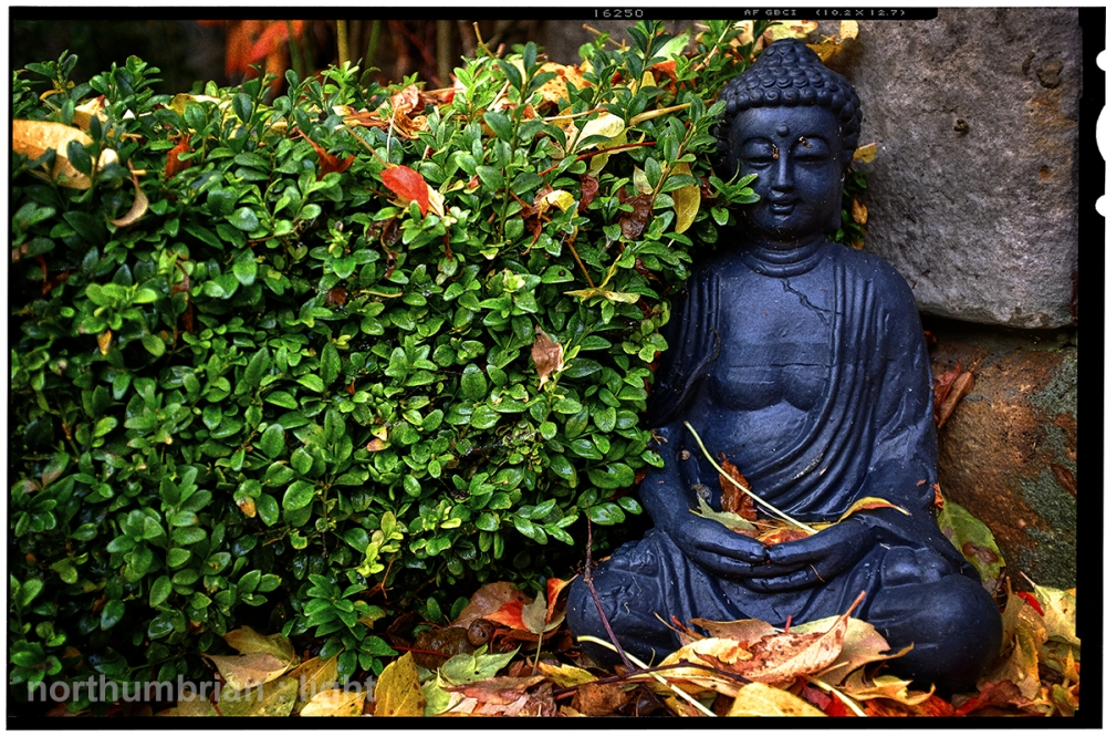 Siddhārtha Gautama ...
