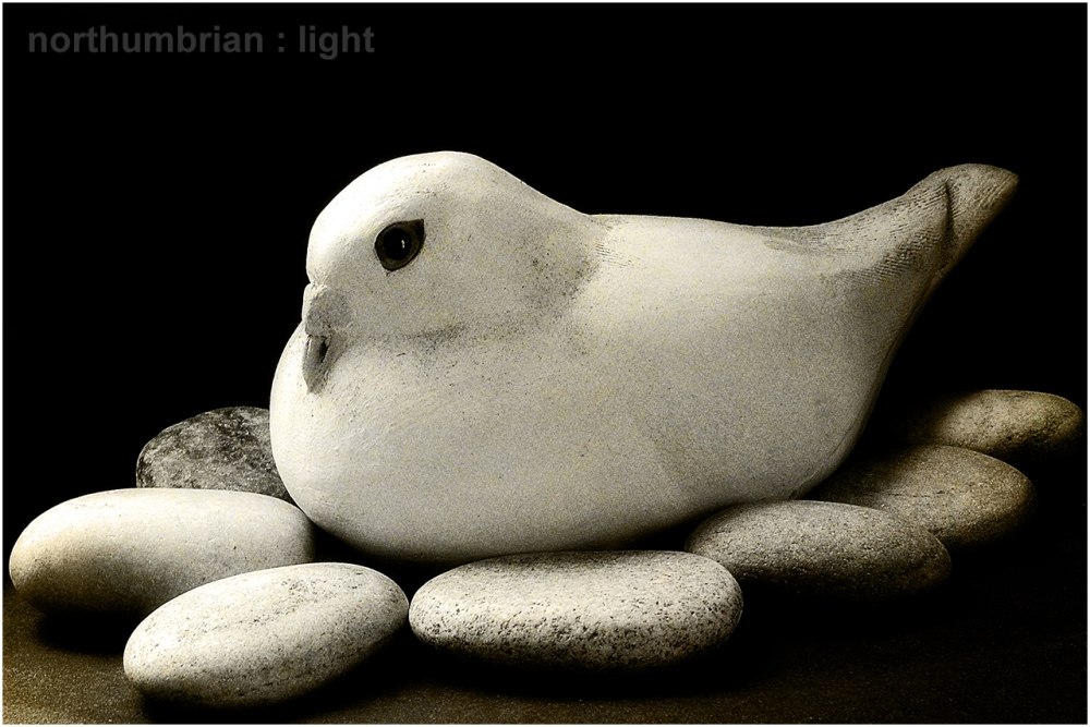 White dove ...