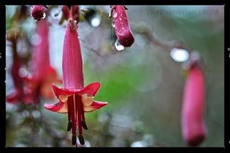 Rainy Day Flowers #12 & 35 ...